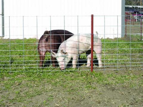 Galvanized Farm Fence in China